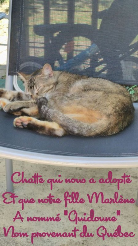 CHATTE QUI NOUS A ADOPTE...