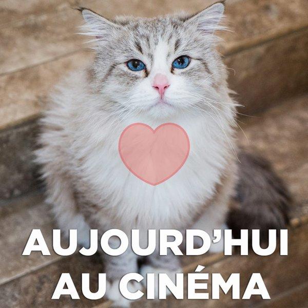 AUJOURD'HUI CINEMA :)