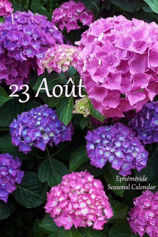23 AOÛT... BELLE JOURNEE...
