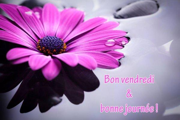 BON VENDREDI & BONNE JOURNÉE !
