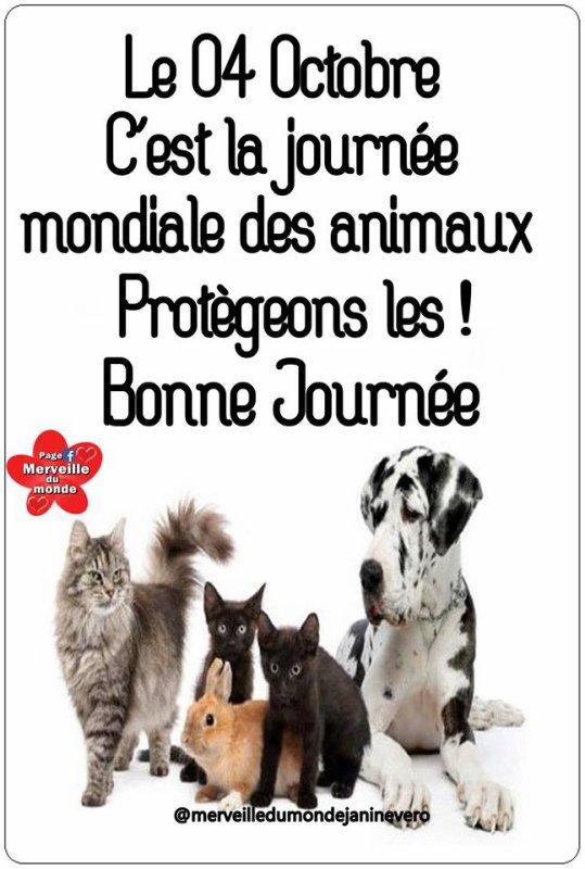 CE JOUR : JOURNÉE MONDIALE DES ANIMAUX