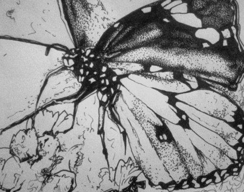 détail de papillon pour mamy