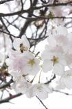 Photo de sakura-ino125