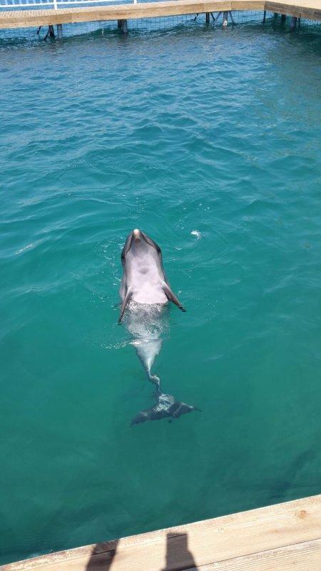 C'est le dolfin park en français ça veut dire le parc des dauphins c'est à Bodrum