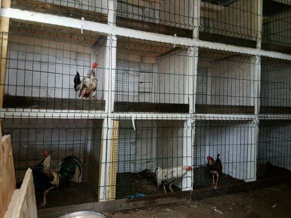 Fin de la première construction des cages