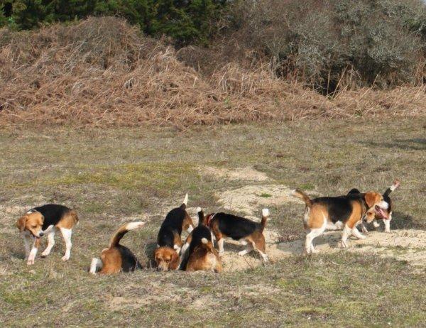 Autres photos de la chasse à courre au lapin