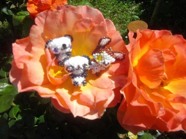3 amis sur une rose