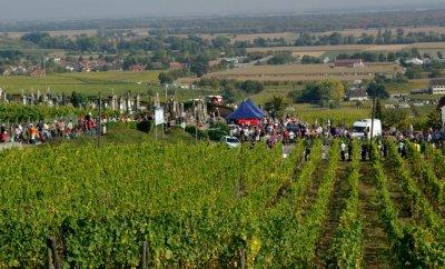 Sur les coulisses du Rallye de France Alsace