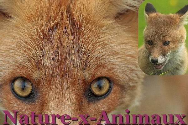 Welcome On Nature-x-Animaux.sky