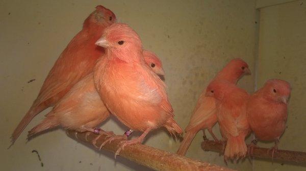 Tout le monde est dehors, la femelle refait son nid ....!