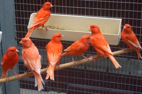 Vue sur quelques oiseaux en cours de mue !