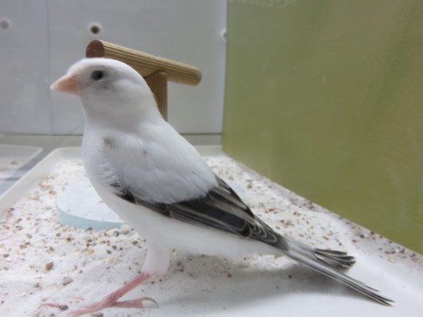 Spectaculaire cet oiseau .....!