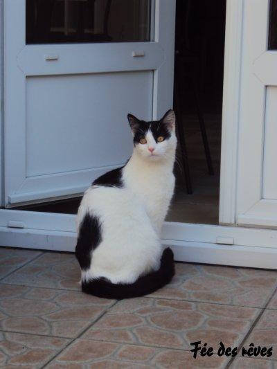 Moi vouloir être chat!!