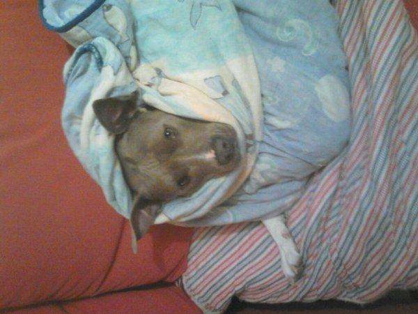 Mollesse malade et fatigué !!!