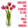 Don't forget to Smile today :-)