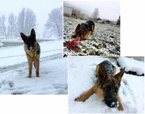 Découverte de la neige aujourd'hui pour
