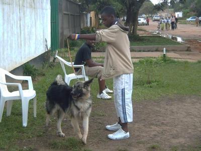 encore gervais et le chien