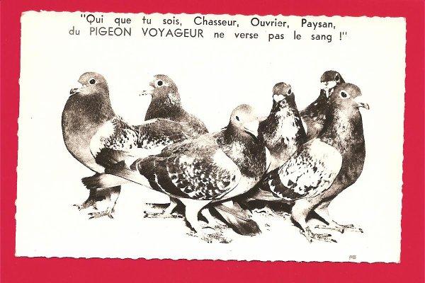 carte postale PIGEON VOYAGEUR : Style Houette Calais : Très beau Message  Havre Granville