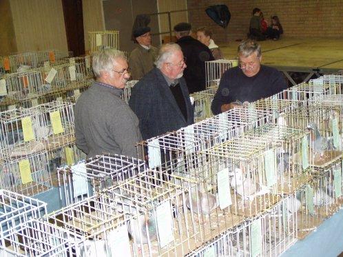 expo colombophile BOESCHEPE le 20 novembre 2011