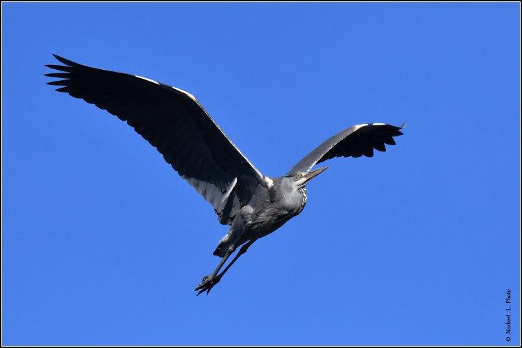 article  N° 1512  les oiseaux ..........