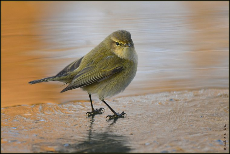article  N° 1514  les oiseaux ...............
