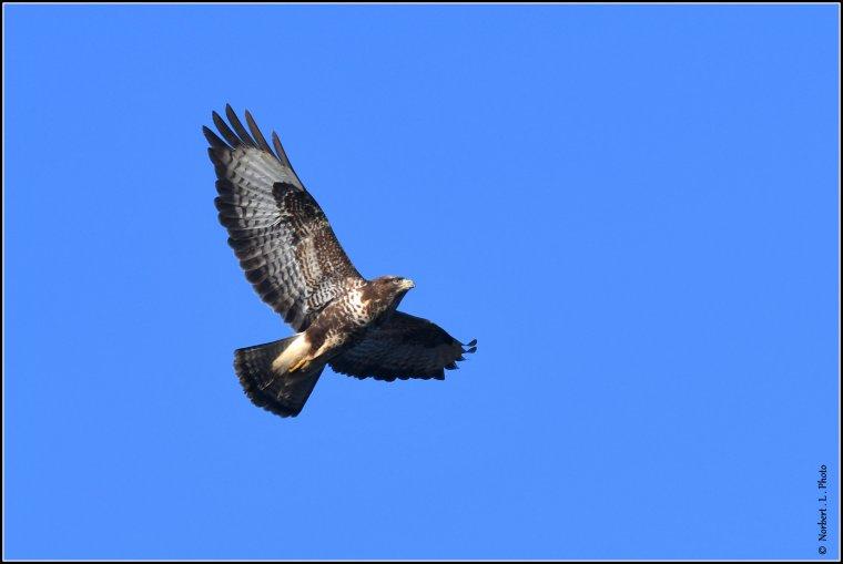 article  N° 1515  les oiseaux ...................