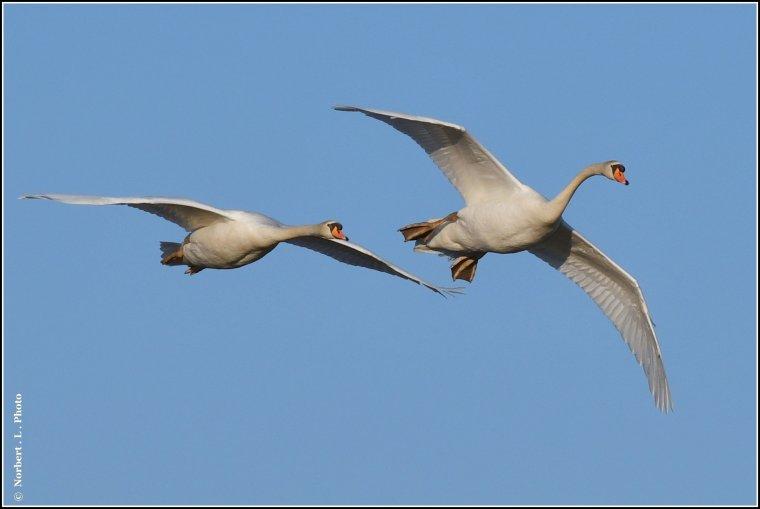 article  N° 1516  les oiseaux ...............