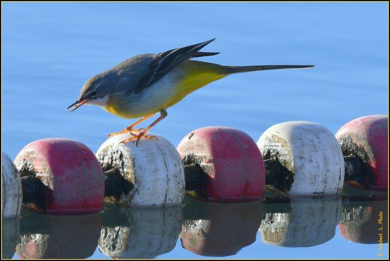 article  N° 1521  les oiseaux ............