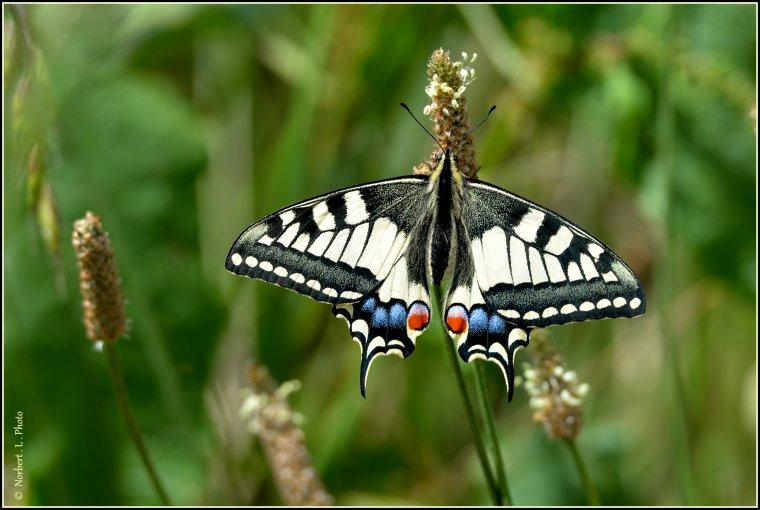 article  N° 1532  les papillons ........
