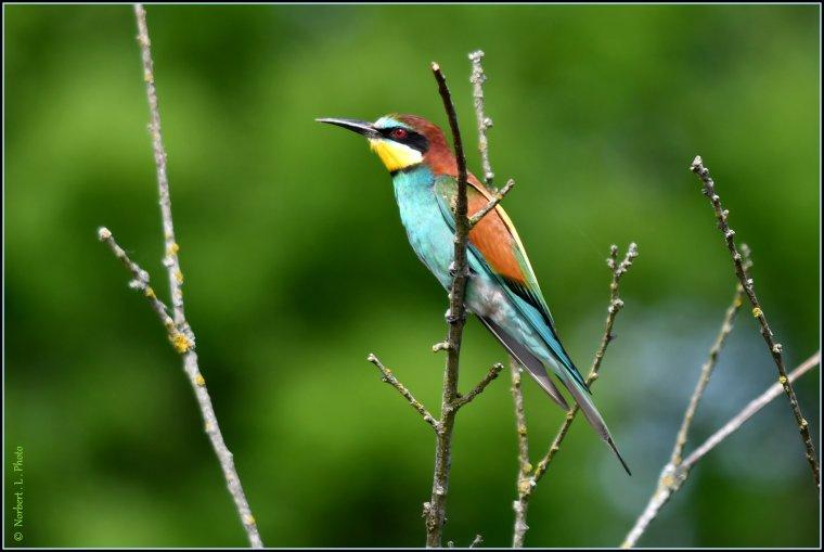 article  N° 1533  les oiseaux ...........