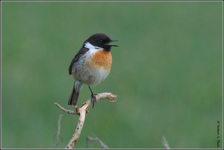 article  N° 1534  les oiseaux ..........