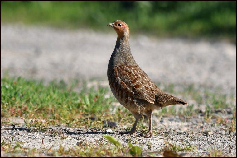 article  N° 1536  les oiseaux .......