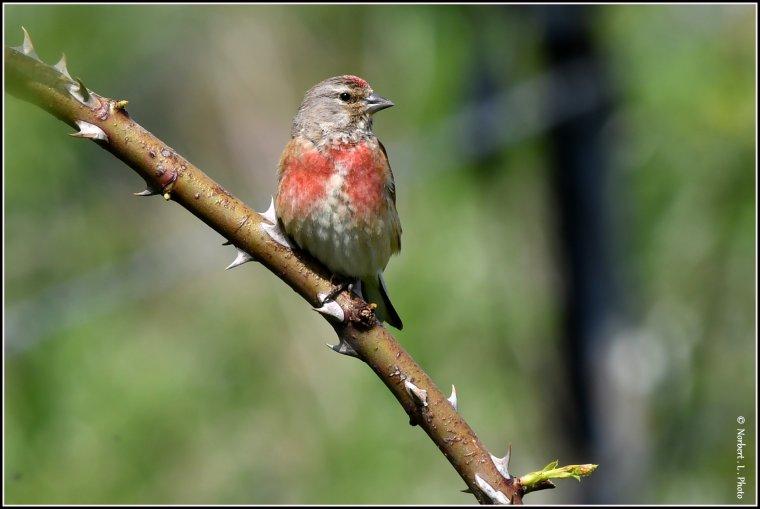 article  N° 1537  les oiseaux .........