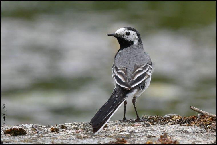 article  N° 1538  les oiseaux ...........