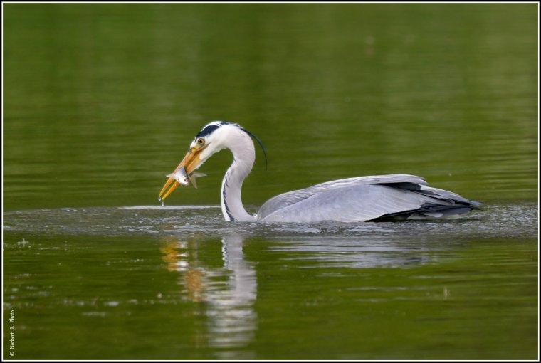 article  N° 1539  les oiseaux ............