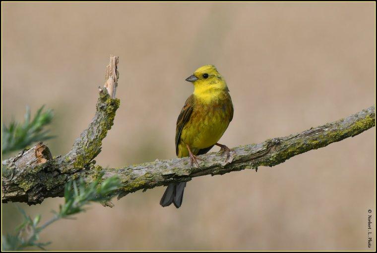 article  N° 1542  les oiseaux ...............