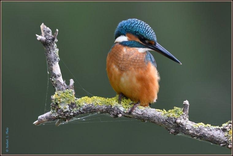 article  N° 1543  les oiseaux ................