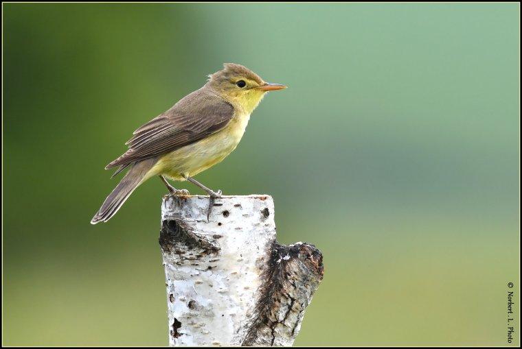 article  N° 1544  les oiseaux .................