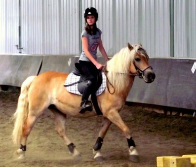 Un animal, un cheval