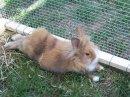 Photo de la-vie-des-lapins42100
