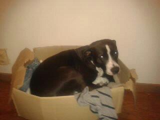 mon chien qui fait son exiler dans la caisse