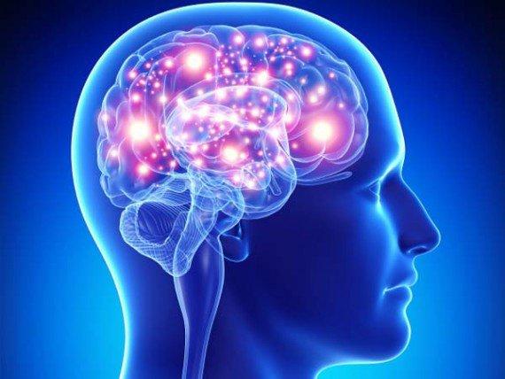 Les deux partie du cerveau ont chaque'une sa propre volontée !