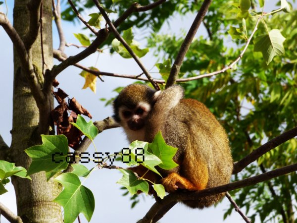 En haut de mon arbre
