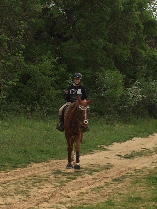 mon cheval, ma vie ❤