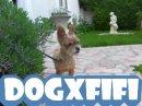 Photo de dogXfifi