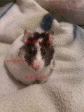 Photo de Ma--Hamster--Lulu