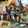 SOS-chevaux95