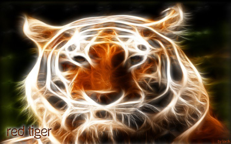 REFLECTION OF THE TIGER