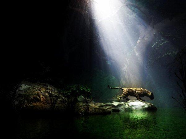"""Animals - House Of The Rising Sunn, requiem 2012, pour les tigres """"année zéro, année noir, ballade dérisoire, chronique d'un déclin annonçé, mesures renforçées ? les portes de la liberté des tigres bientot vont se refermées, et c'est là que nous finirons nos reves, quand d'autres gars les ont défendues, pour toi mon tigre qui m'a donné, peu-tu jamais me pardonné, je l'ai enveraient tous en enfer, les larmes de honte qu'ils verseront ne suffirat jamais à calmer ma colere,"""