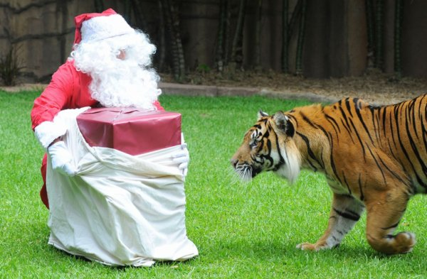 http://www.avaaz.org/en/petition/Au_Gouvernement_Francais_interdire_les_animaux_sauvages_dans_les_cirques_en_France/?ccqOShb